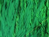 Luce nell'erba